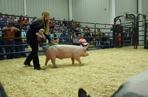 Southern Select Show Pigs - Show Pig Sales Featuring the Top Show ... 429e8f050448